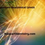 Important Anatomical Levels and Buffers of Body