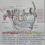 Sketches of Maxillary Artery, Sphenopalatine Ganglion and Venous drainage of Scalp and Face