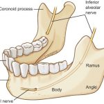 Anatomy of The Mandible – Video