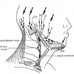 The lymph nodes in the face and neck region and the areas of drainage