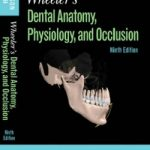 Wheeler's Dental Anatomy, Physiology and Occlusion 9th Edition PDF Download