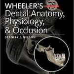 Wheeler's Dental Anatomy, Physiology and Occlusion 10th Edition Download